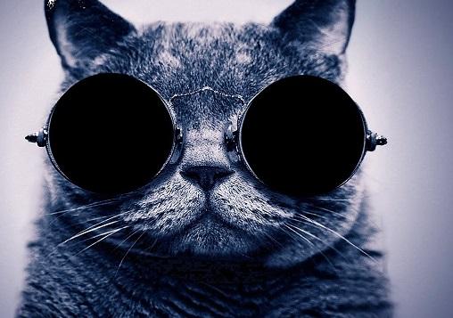 Lata de Sal, la editorial de gatos llega a librerías nacionales.