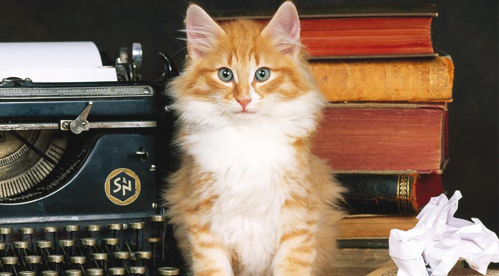 Lata de Sal y la primera antología de poesía felina.